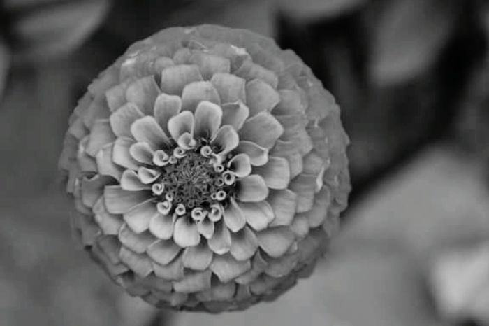 Flower Photography Macro Nature Macro_collection Macro Photography Flower Collection Flower Power Nature Photography Flowers_collection Close Up Flower Eyem Flowers Blackandwhite Black And White Flowers Black And White Flower Collection Black And White Photography Black And White Flower Flower Eyem Flower_collection Macro_flower Macro Flowerlovers Flower Porn Flowers Flower Flowering Nature_collection