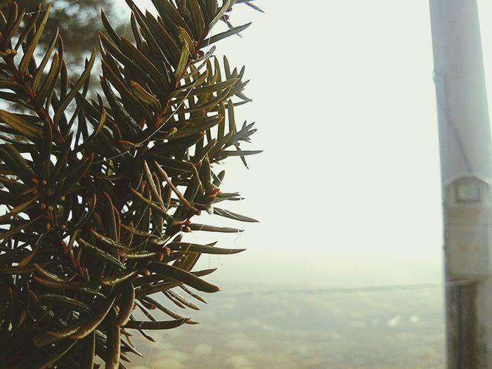 random street photo. Trees Good Morning Streetphotography Focusing