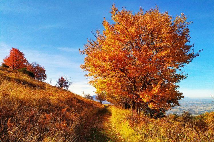 Autumn tree on landscape against sky