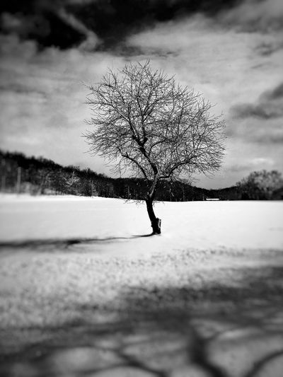 Tree_collection  Tree Blackandwhite EyeEm Nature Lover Focus IPhoneography Outside Photography Outdoor Pictures Mystyle Branches Branchout Trunk Seasons Bare Lonely Tree Darkness And Light Silence Infocus Upstate