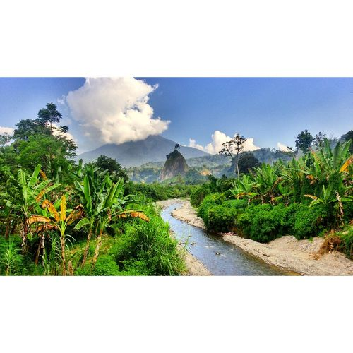 Tranquility Nature Outdoors Day Scenics Plant No People Beauty In Nature Tree Water Growth Sky Blue Clear Sky Horizon Over Water Journey Tranquility Landscape_Collection Photography Landscape Bukittinggi Westsumatera Wonderfulindonesia Conected Whit Travel Takenbyme Summer