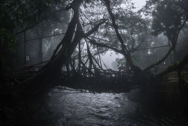 Trees growing by river in forest