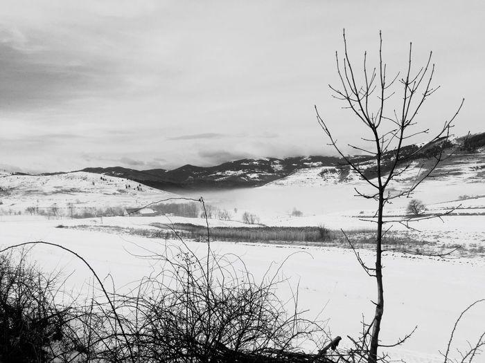 Foggy Morning Landscape Branch Winter
