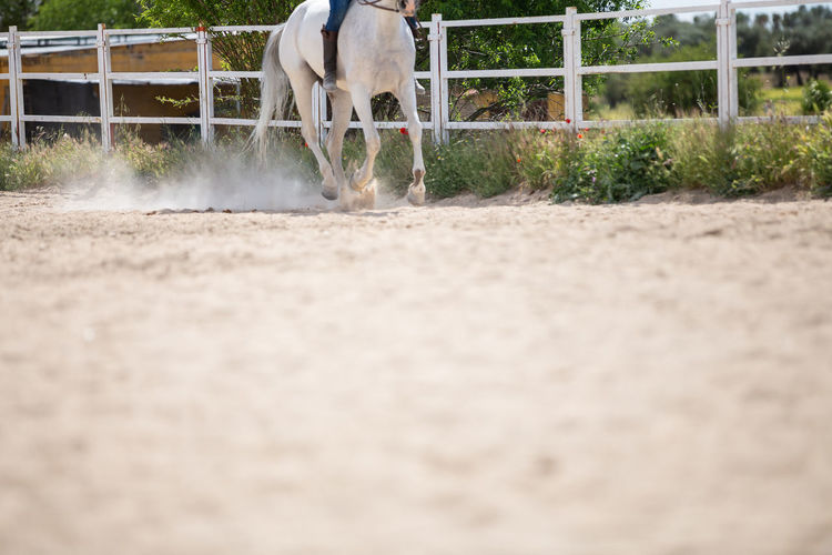 Surface level of horse running in ranch