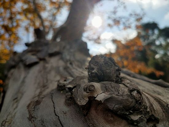 Sunlight Tree Outdoors Close-up Nature Day No People Beauty In Nature ınstagram EyeEm Nature Lover Check This Out Through My Eyes 3XSPUnity Galaxyography Galaxy S7 Tree Bark Tree Growth Sunlight TreePorn Bokeh Textured