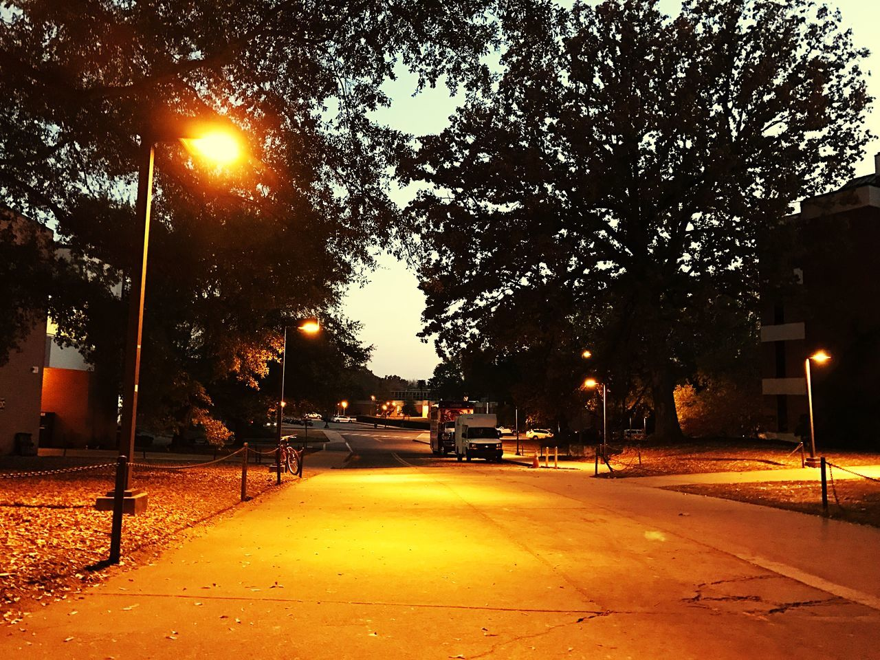 street light, illuminated, street, tree, outdoors, night, road, the way forward, no people, building exterior, city, sky, nature