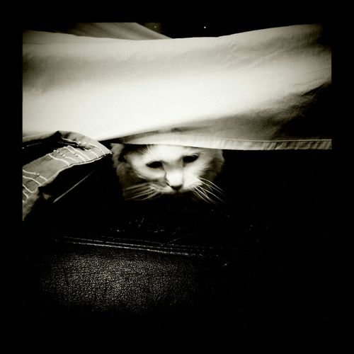Morwen in my blanket fort.