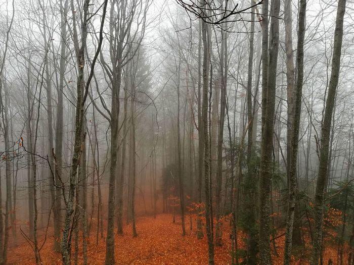 50 Ways Of Seeing: Gratitude Tree Branch Fog Bare Tree Forest Tree Trunk Sky Rainy Season Rain Weather