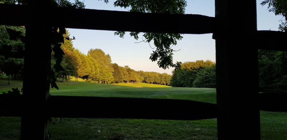 Golf Golf Course Fairway Greens Fence Looking Through Colourful Englishcountryside Tree Silhouette Sky Grass Tree Trunk Bark Countryside Tranquil Scene Branch Treelined