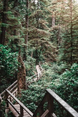 Wonderful Rainforest in Vancouver island Rainforest Travel Trail Green Green Color Plant Tree Growth Nature Forest Day No People Land Beauty In Nature Tranquility Railing Green Color Lush Foliage Foliage Wood - Material Outdoors Tranquil Scene Tree Trunk Trunk Built Structure