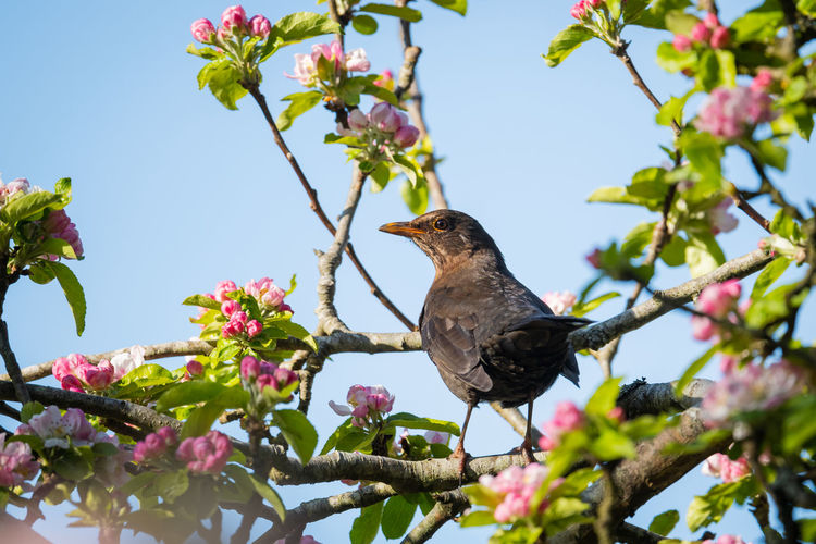 Low angle view of bird perching on flower tree