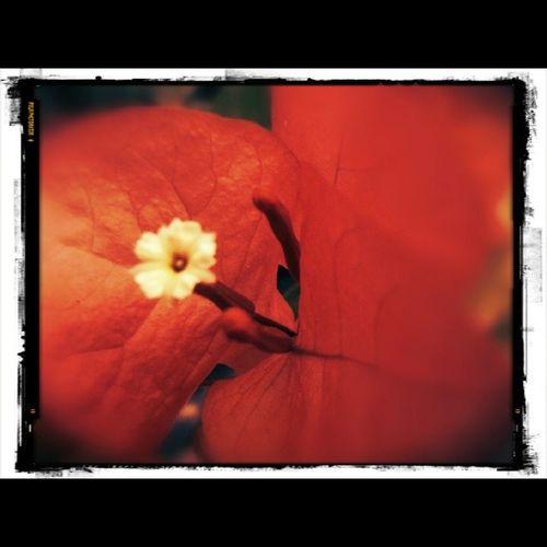 Pretty Beautiful Red Orange pink nature gorgeous warm morning silhouette ig_miranda igersaltosmirandinos igerscaracas flower color ig_venezuela