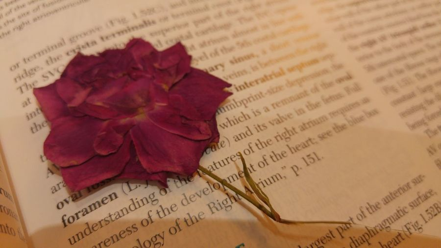 Open Book Text Education Close-up Paper Indoors  Flower Page Rose - Flower Table Handwriting  Reading Anatomy Baghdad , Lraq Selective Focus Baghdad Single Flower