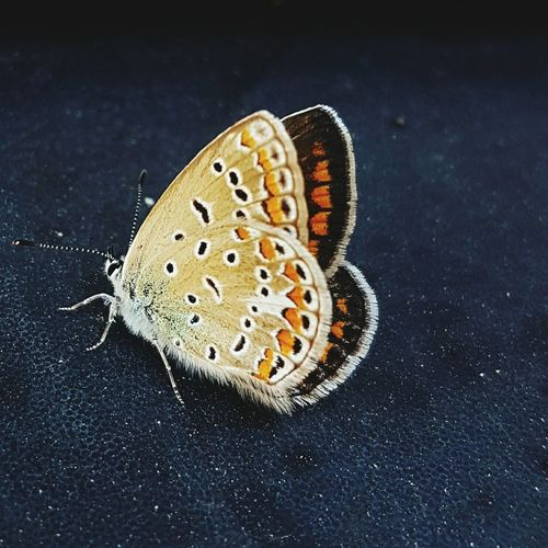 Close-Up Of Butterfly On Textured Surface