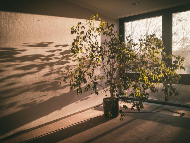 Nklb Interior Views IPhone SE Plant Life Sunlight No People Window Tranquility Shadow Play