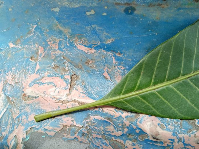 High angle view of leaf against blue water