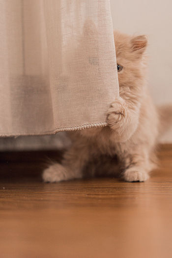 Close-up of cat hiding behind curtain