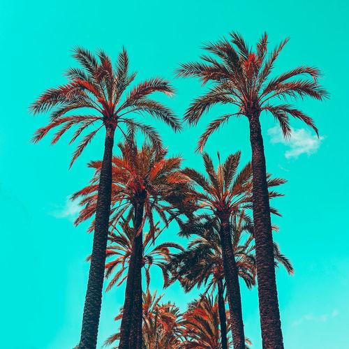 Palm tropical location