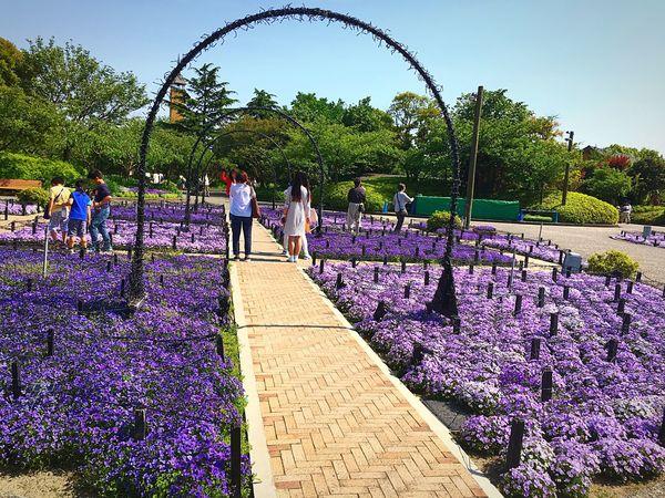 Purple hue 💜 Colour Of Life