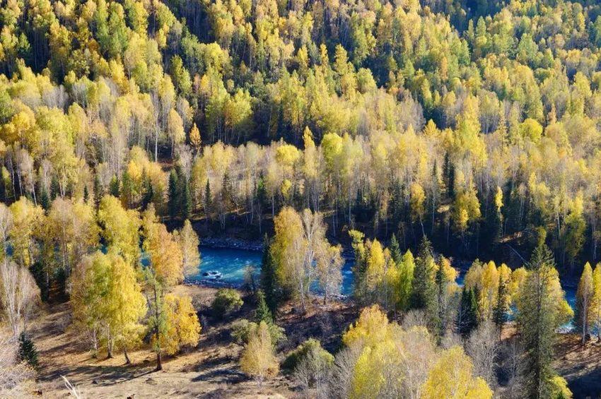 2015.9.27 -China xinjiang Tree Forest Nature Pine Tree Pinaceae Tranquil Scene Scenics