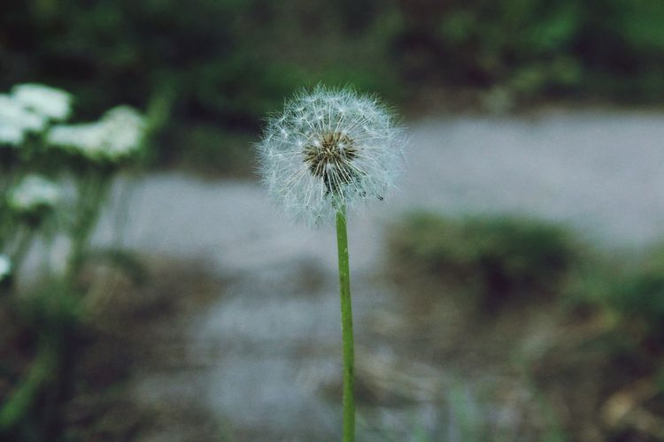 Photography Photooftheday Photographer Photograph Lifestyles Truelife Like Likeforlike Lovephotography  Professional Nature Nature_collection Nature Photography Naturelovers Hobby Myhobby Truestory Dmuchawiec Flower Flower Head Thistle Uncultivated Wildflower Close-up Plant Dragonfly