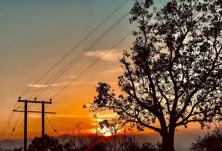 Silhouette tree against sky during sunset