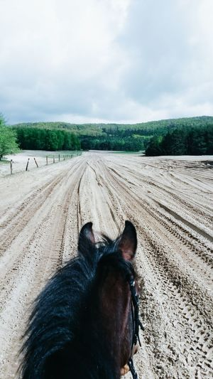 Horse Horseriding Ride Sand Nature Ausritt Mountains Outdoors Horses Forest Horse Photography  Animal Themes Nature Openspace Landscape Horseback Riding Adventure Horsehead Gopro Openspaces Pet Portraits