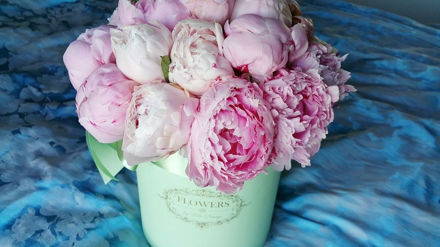 пионы любимыепионы цветы Flower Pink Color Petal Fragility Freshness No People Bouquet Flower Head Rose - Flower Beauty In Nature Indoors  Nature Close-up Day Peony  Indoors  Peony  AI Now