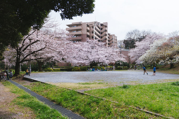Akatsuka Park, Tokyo. Sakura Season 2016. Architecture Bench Building Exterior Built Structure Day Flower Fountain Grass Growth Incidental People Leisure Activity Lifestyles Men Nature Park - Man Made Space Person Sakura Season  Tree Water