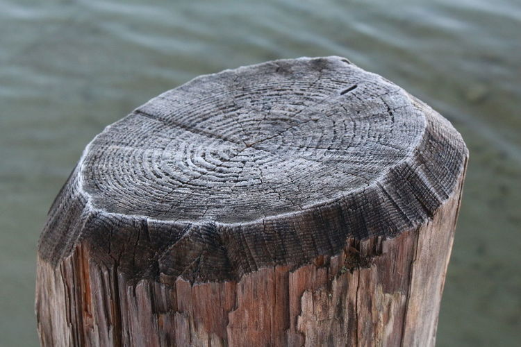 Close-up of wooden post at beach
