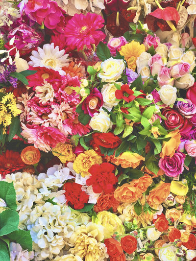 High angle view of multi colored roses