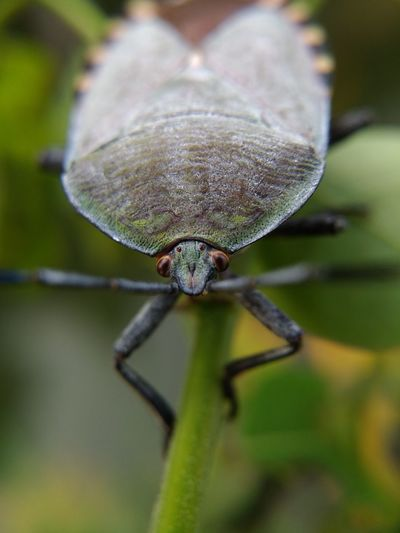 Insect Close-up Animal Themes Spider Spider Web Arachnid Animal Leg Intricacy Animal Limb Invertebrate Paw Weaving Dew Prey Chachoengsao Ant Arthropod Web Jumping Spider Blooming Fly Beetle