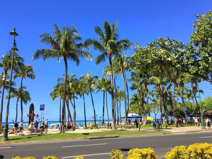 Beach Beachphotography Blue Blue Sky Day Duke Kahanamoku Hawaii Hawaii Life Hawaiian Hawaiishots Hawaiisky Honolulu  Honolulu, Hawaii Landscape Nature No People Outdoors Palm Tree Sunday Sunshine Travel Travel Destinations Tree Vacations Wave