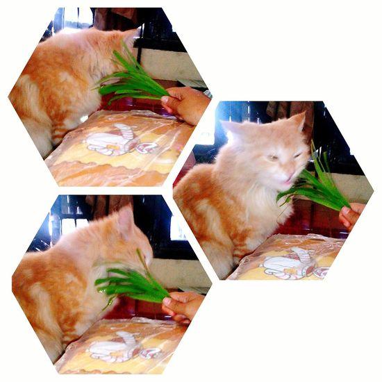 Cat Angoracat Angora Cats Cat Lovers Caturday Catoftheday Pets Pet Cute