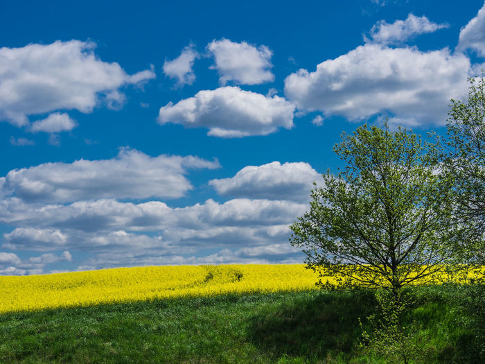 Landscape in Thuringia, Germany. Agriculture Beauty Beauty In Nature Blue Cloud - Sky Day Field Flower Growth Landscape Multi Colored Nature No People Oilseed Rape Outdoors Plant Rural Scene Scenics Sky Social Issues Springtime Summer Thuringia Tree Yellow