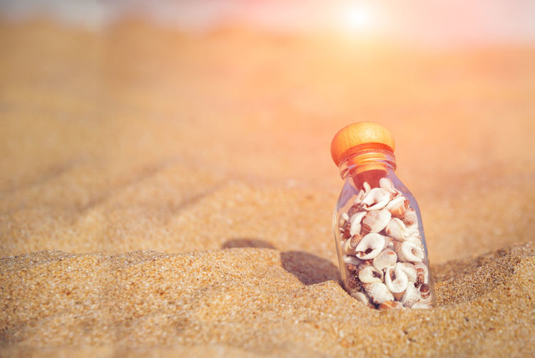 Animal Wildlife Shell Animal Land No People Sand Animal Shell Animal Themes Animals In The Wild Nature Seashell Beach Sunlight Close-up Day Selective Focus Sea Focus On Foreground One Animal Shadow Outdoors Marine Small