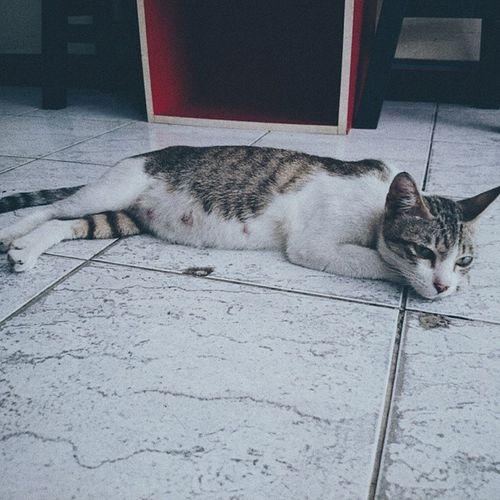 Cat กาแฟชงสุข ชงสุข Sleep
