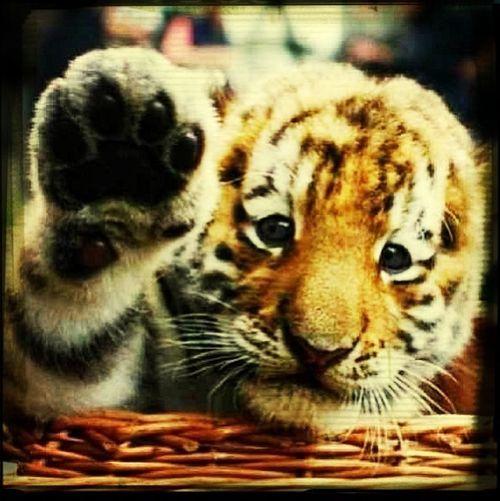 Baby Leon Toc Toc Hello!