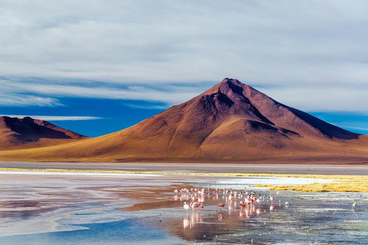 Flamingoes at the base of an Andean volcano in Uyuni, Bolivia in Laguna Colorada America Animal Beautiful Bird Blue Bolivia Colorado Desert Flamingo Flamingoes Flamingos Laguna Lake Landscape Nature Park Red Salar Sky South Uyuni Volcano Water White Wild