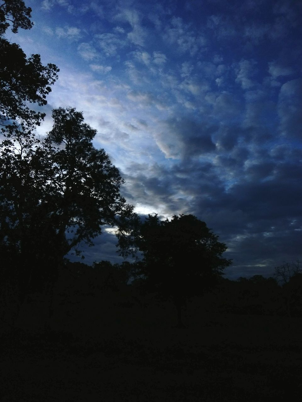 tree, nature, low angle view, beauty in nature, sky, scenics, tranquil scene, silhouette, tranquility, no people, outdoors, landscape, growth, day