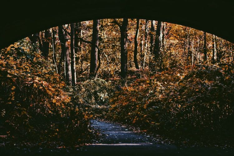 The Crisp of Fall Nature Tree Beauty In Nature Outdoors Tunnel Architecture Hipster Tranquility Street Nature