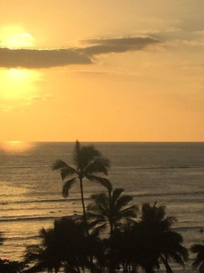Palm Trees 🌴 Pacific Ocean Sky Pacific Ocean View Sky-clouds Pacific Island Island Of Oahu, Hawaii Oahu Oahu, Hawaii Oahu/Hawaii Tropical Tropics Pacific Sunset No Edit/no Filter Ocean Water No People Silhouette Sky Sunset An Eye For Travel