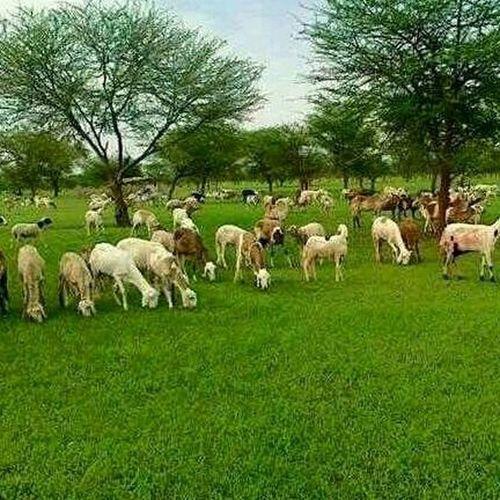 Getting Creative Northen Kordofan /Sudan