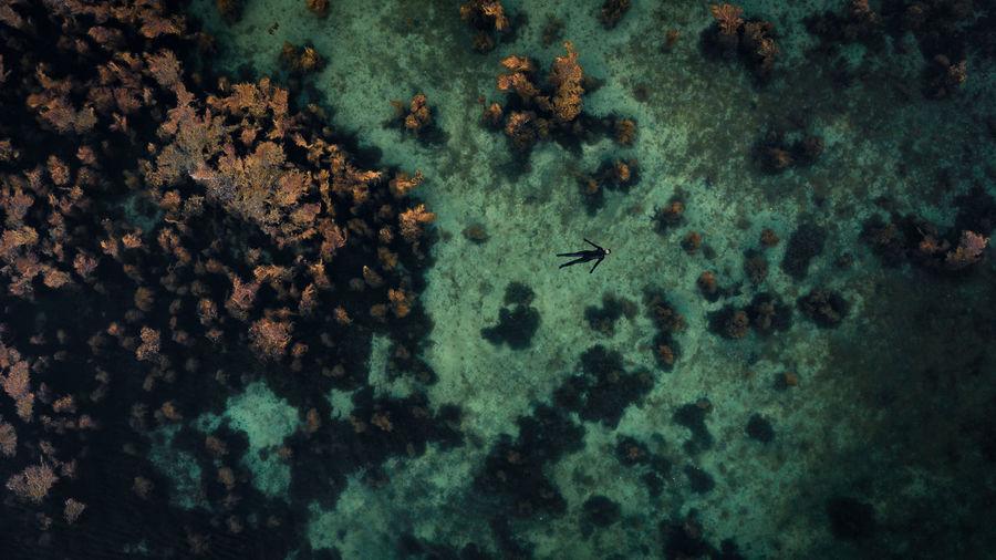 Aerial view of scuba diver swimming in sea