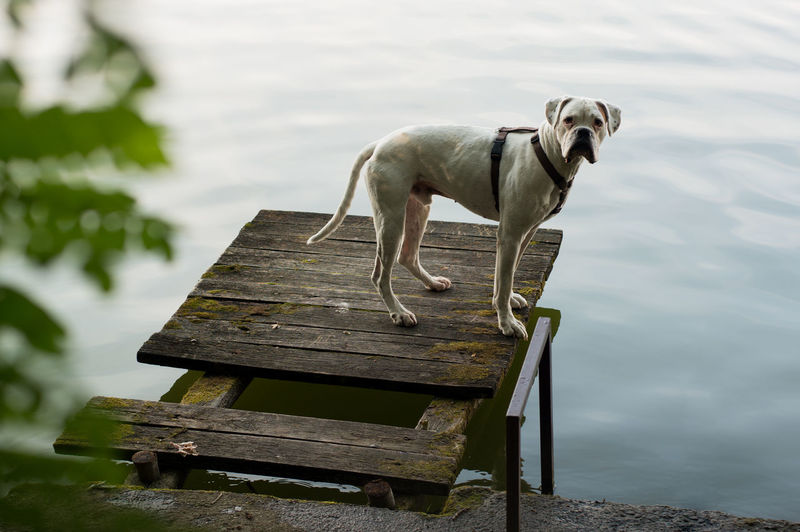 Dog sitting on bench against lake