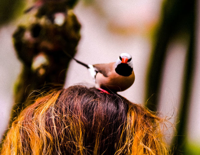 Bird on head. Finch Bird Photography Beak And Feathers Wings Colorful. Beauty In Nature Ammunition Close-up Stem Bud