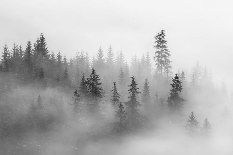 Abstract landscape in the mountains, with fog in the forest Backgrounds Abstract Abstract Backgrounds Blackandwhite Fog Foggy Forest Freeze Haze Hiking Landscape Landscape_Collection Nature Nature_collection Mist Mountains Misty Minimalism Mysterious Natural Outdoors Pattern Pine Tree Scenery Silence Plant Tree Tranquility Beauty In Nature No People Tranquil Scene Scenics - Nature Land Non-urban Scene Day Idyllic Growth Sky Remote Mountain Coniferous Tree