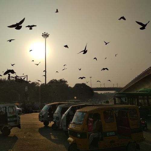 Live like a bird Feel the freedom Take a deep breath And Fly till you achieve your goal Photographer Streetphotographer City Vehicle Environment India Newelhi Delhi Streetphotography Street Photography Sunset Birds Bird Nature Sun Fredom Nature Sky Outdoors No People Day Beauty In Nature