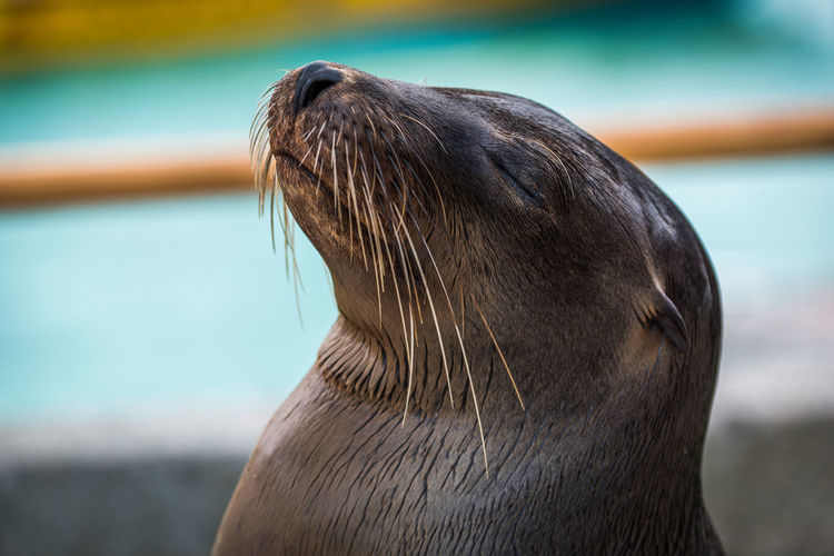 Close-up od sea lion with eyes closed