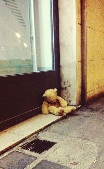 Poor little Teddy Bear Street Photography Mission Mystery